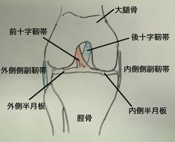 knee-ap.jpg